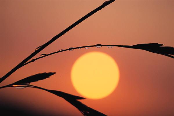 Sunrise Solar Lighting Future