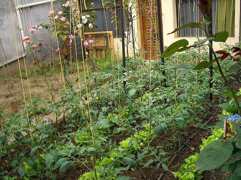 Grow_a_Garden