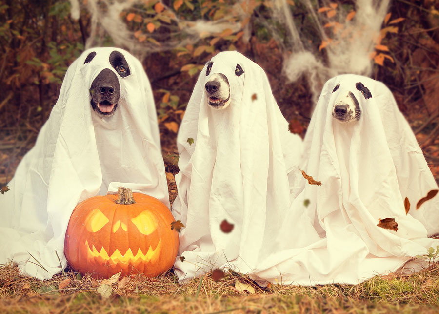 Halloween-Dogs.jpg