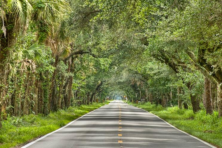 Martin County Grade Shaded Roadway