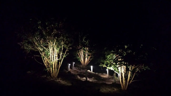 Solar Powered Landscape Lights Night